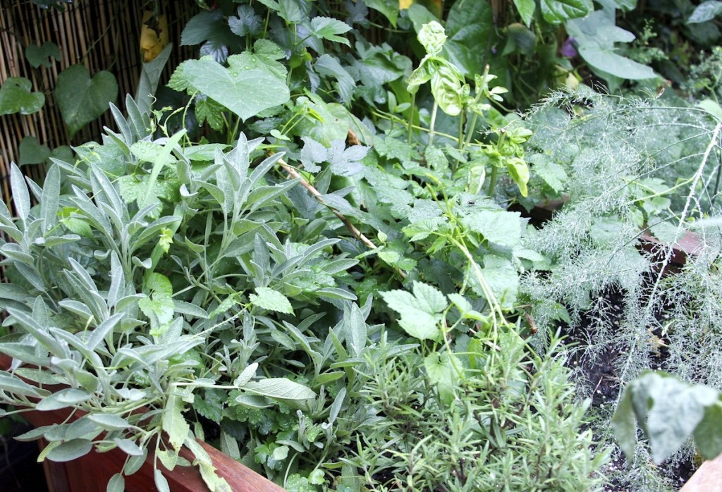 _MG_0195_2014_08_13_Herbs
