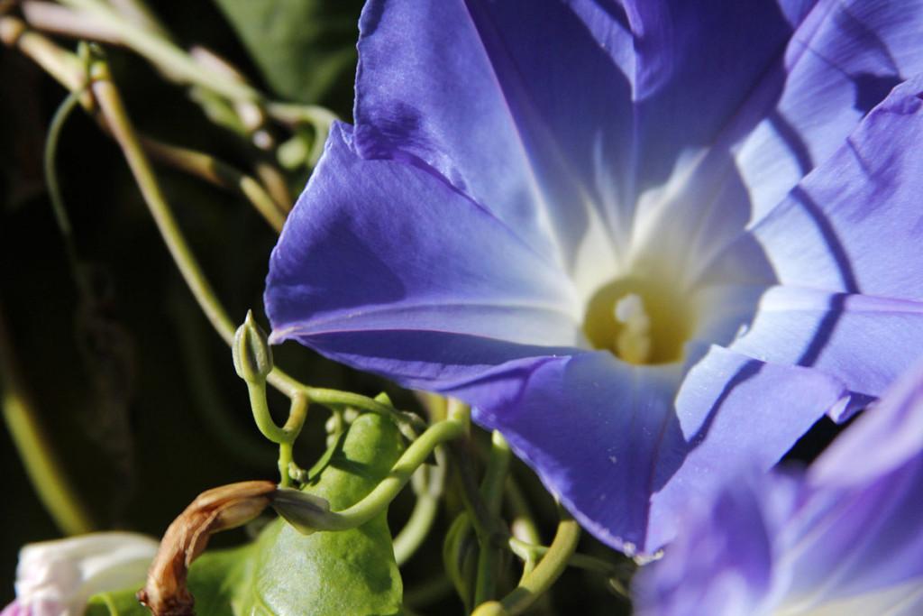 _MG_0295_2014_Flowers