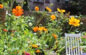 IMG_0649_Flowers_2015_07_18_sm