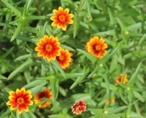 IMG_0658_Flowers_2015_08_06_sm
