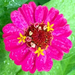 IMG_2628_Flowers_2015_06_20_sm
