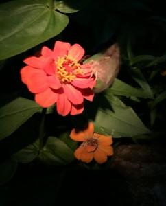 IMG_2907_Flowers_2015_09_03_sm