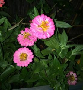 IMG_2909_Flowers_2015_09_03_sm