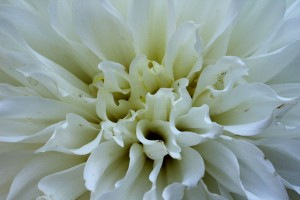 _MG_0683_Flowers_2015_08_14_sm